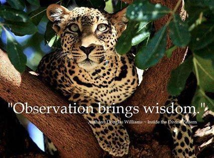 Observation brings wisdom ~Anthony Douglas Williams--Inside the Divine Pattern